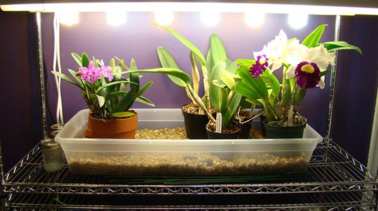 Безценни ми съвети към всички онези, които имат орхидеи 60