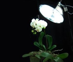 Безценни ми съвети към всички онези, които имат орхидеи 57