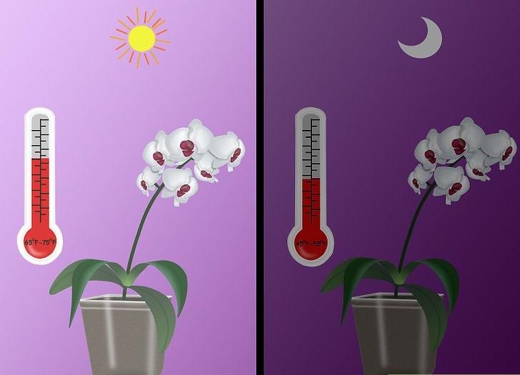 Безценни ми съвети към всички онези, които имат орхидеи 58