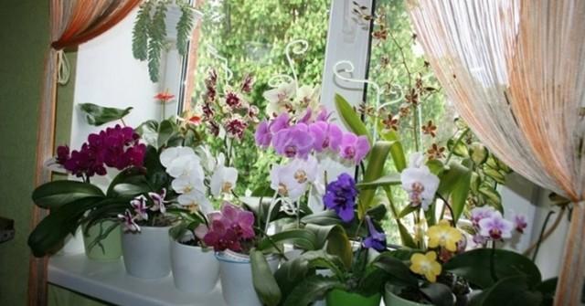 Безценни ми съвети към всички онези, които имат орхидеи 54