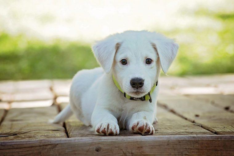 За всички собственици на куче, само те ще разберат това 54