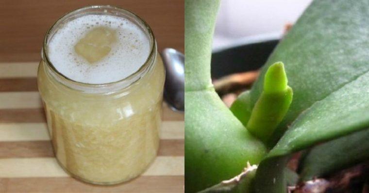 Накарайте орхидеята да цъфти като луда с жива вода за орхидеи 58