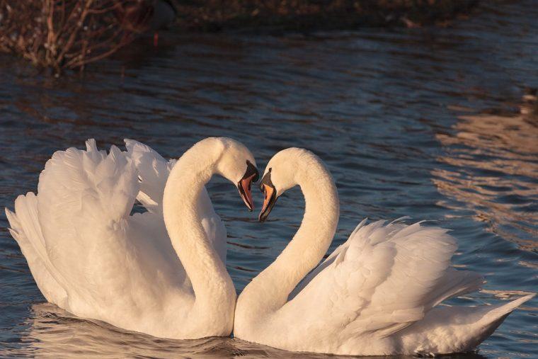 Зодиите, които ще имат само една единствена голяма любов 30