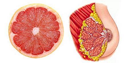Храните, които приличат на частите на тялото, те са най-полезни съоветно за тях 11