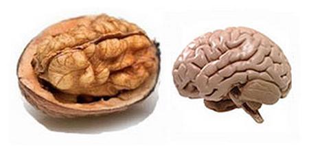 Храните, които приличат на частите на тялото, те са най-полезни съоветно за тях 12