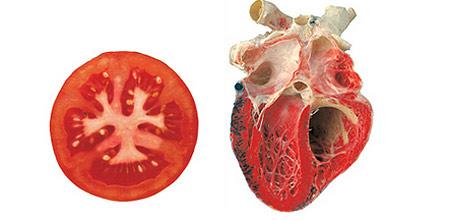 Храните, които приличат на частите на тялото, те са най-полезни съоветно за тях 15