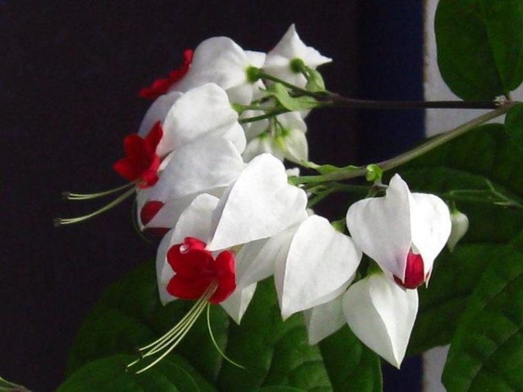 Цветето, което всеки дом заслужава - То носи щастие и любов и се гледа само 34