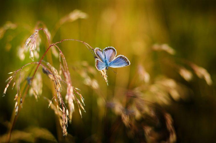 Летяла си една красива пеперуда из поляните и се радвала на свободата си и на прекрасния свят около нея.. Но 14