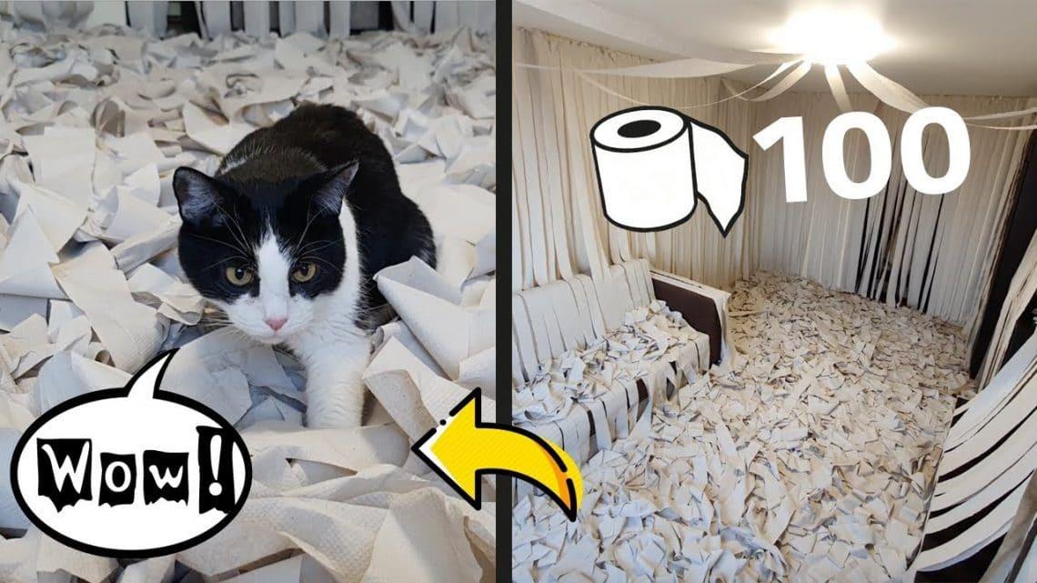 Напълнихме стаята с тоалетна хартия и вкарахме котката вътре - ТЯ ПОЛУДЯ (ВИДЕО) 56