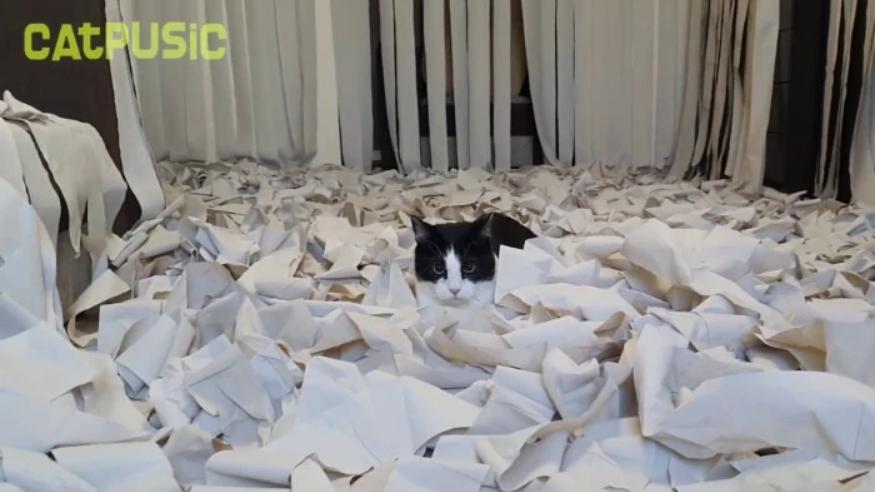 Напълнихме стаята с тоалетна хартия и вкарахме котката вътре - ТЯ ПОЛУДЯ (ВИДЕО) 57