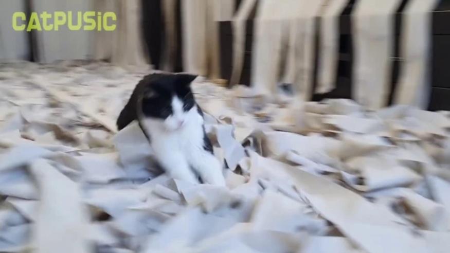Напълнихме стаята с тоалетна хартия и вкарахме котката вътре - ТЯ ПОЛУДЯ (ВИДЕО) 58