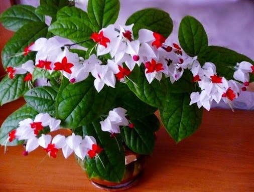 Цветето, което всеки дом заслужава - То носи щастие и любов и се гледа само 35