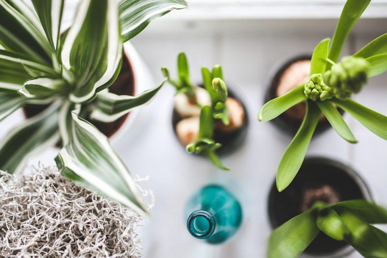 Най-лесният начин да имате уникално красиви цветя у дома 8