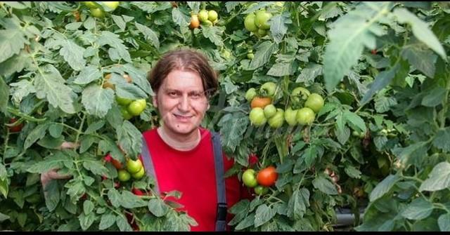 За едно лято ги подхранвам така 3 пъти: Доматите се превиват от плод чак до октомври 33