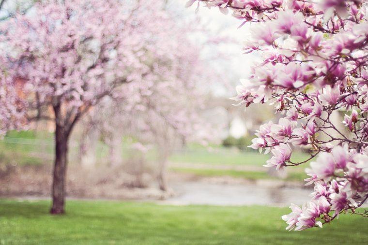Съвети за пролетта полезни за всяка зодия 56