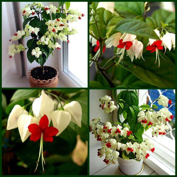 Цветето, което всеки дом заслужава - То носи щастие и любов и се гледа само 33