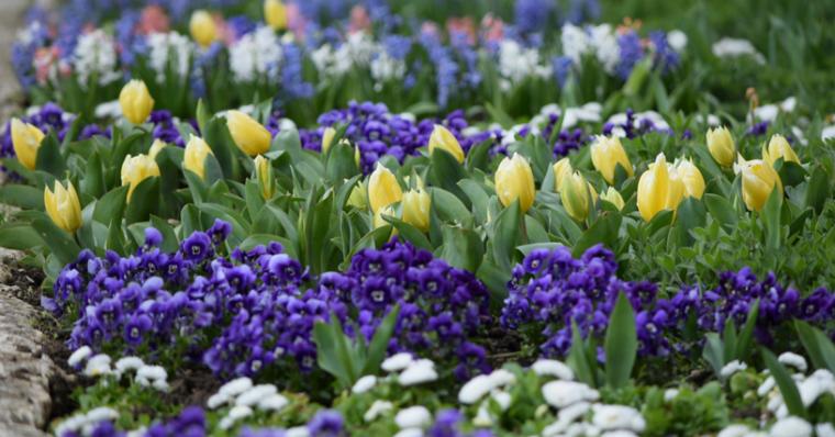 Бижуто на Северното черноморие е Ботаническа градина в Балчик 60