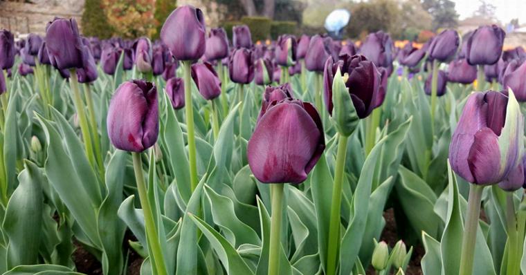 Бижуто на Северното черноморие е Ботаническа градина в Балчик 61