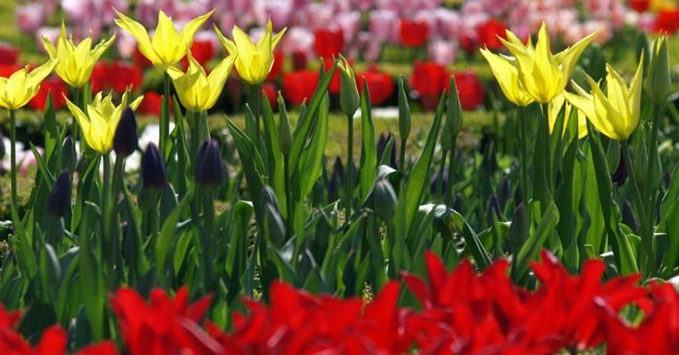 Бижуто на Северното черноморие е Ботаническа градина в Балчик 64