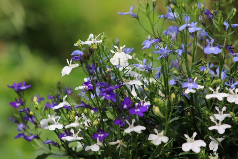 Красиво растение-билка, което помага 33