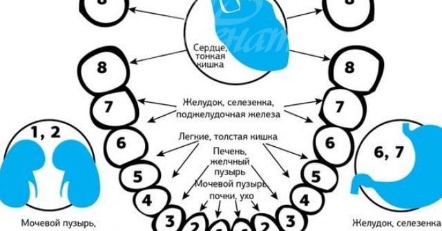 Зъбите и органите в тялото са силно свързани 8