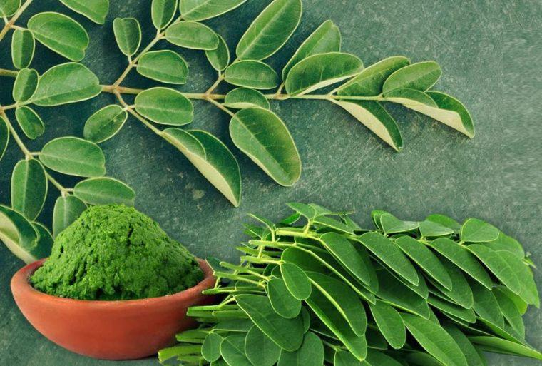 Дървото известно от древността заради чудодейните си ползи за здравето 55