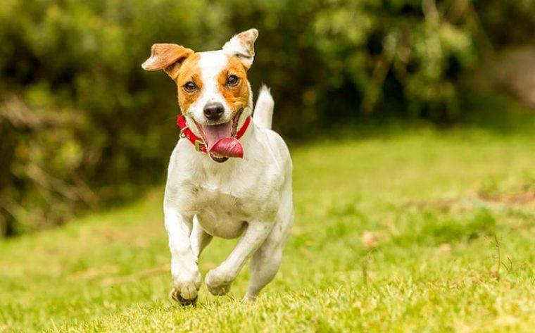 Кучетата, които приличат на зодиите - всяко куче прилича на различна зодия 57