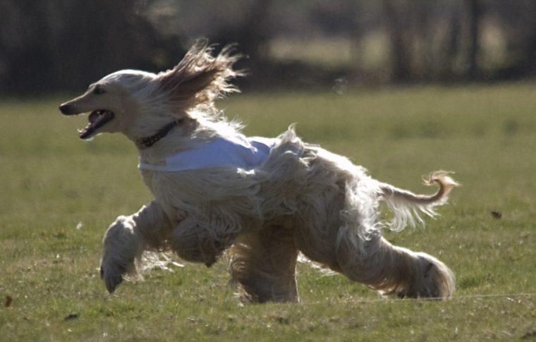 Кучетата, които приличат на зодиите - всяко куче прилича на различна зодия 58