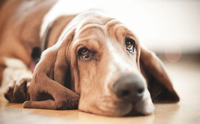 Кучетата, които приличат на зодиите - всяко куче прилича на различна зодия 60