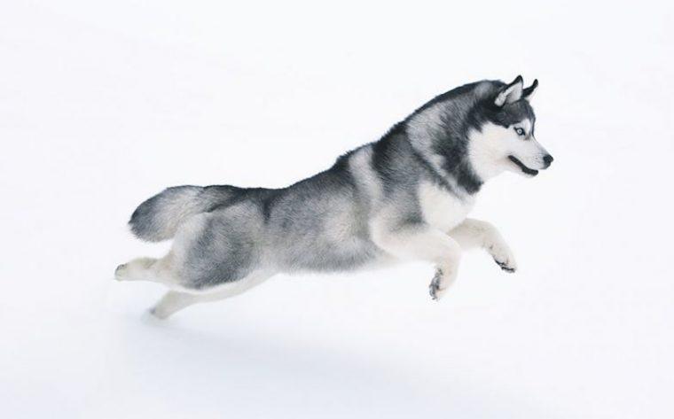Кучетата, които приличат на зодиите - всяко куче прилича на различна зодия 61