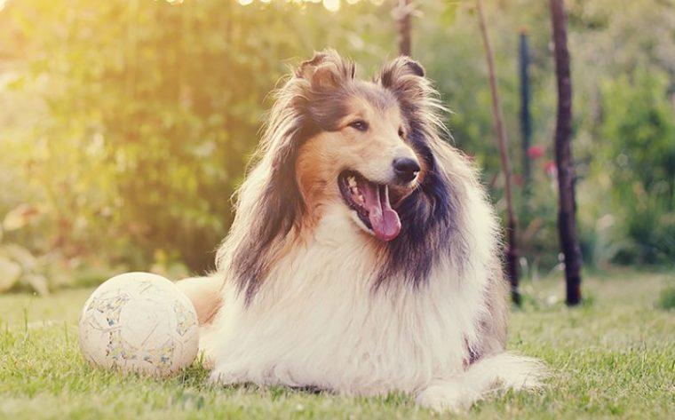 Кучетата, които приличат на зодиите - всяко куче прилича на различна зодия 62