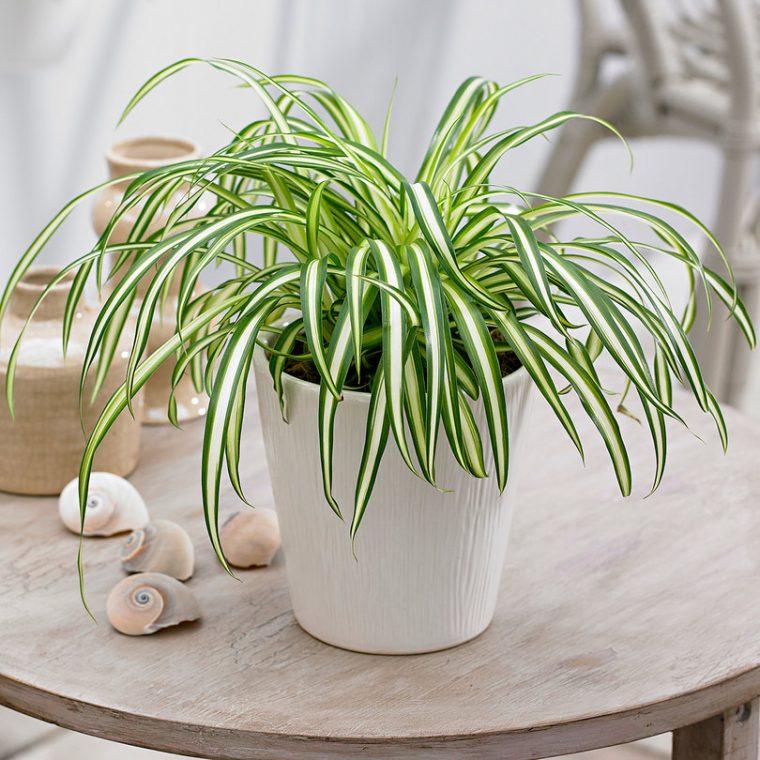 Растенията за дома, които премахват влагата и мухъла 62