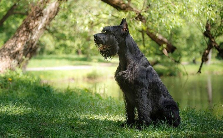 Кучетата, които приличат на зодиите - всяко куче прилича на различна зодия 64