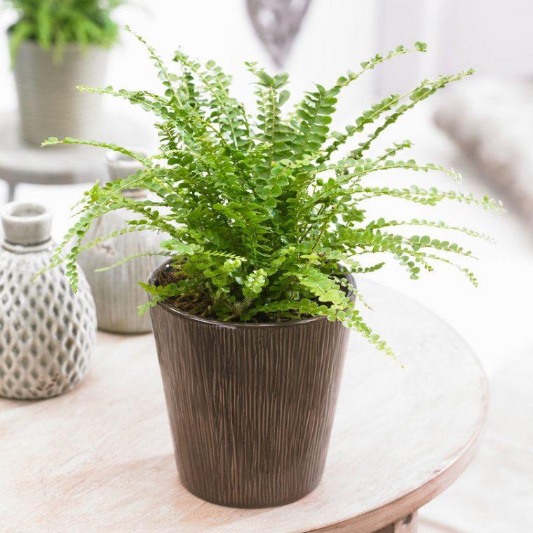 Растенията за дома, които премахват влагата и мухъла 61