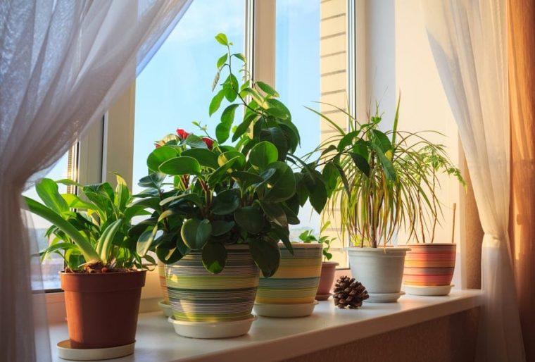 Растенията за дома, които премахват влагата и мухъла 58
