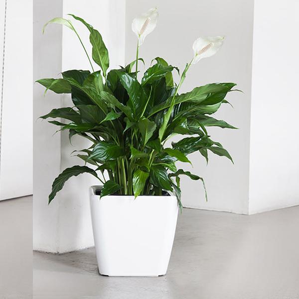 Растенията за дома, които премахват влагата и мухъла 63