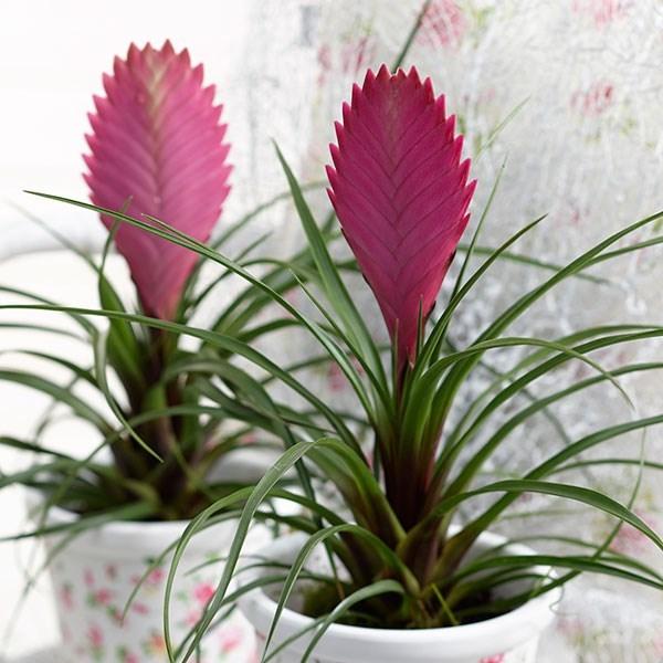 Растенията за дома, които премахват влагата и мухъла 60