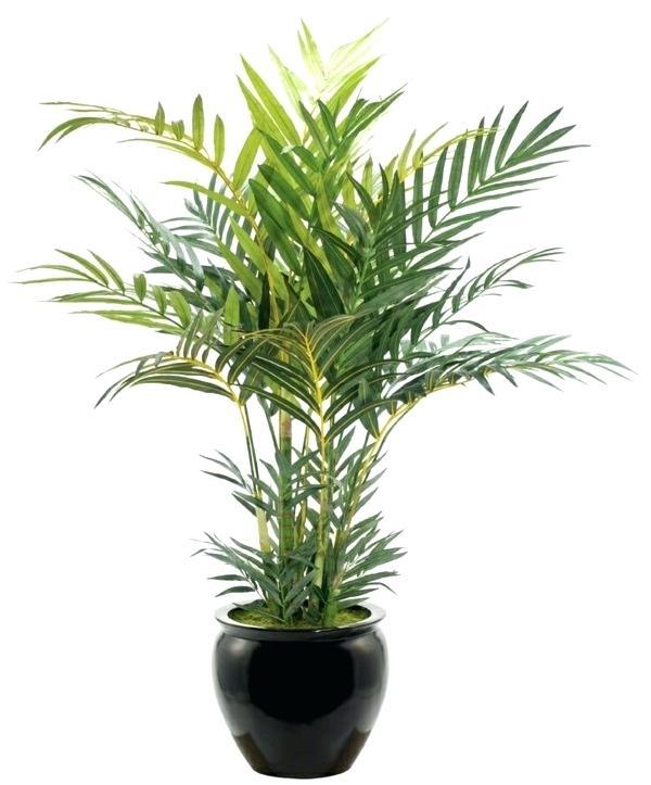 Растенията за дома, които премахват влагата и мухъла 59