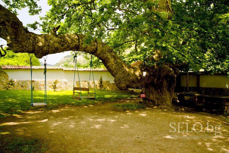 В селото на Преподобна Стойна - Златолист и днес се случват чудеса там (СНИМКИ) 61