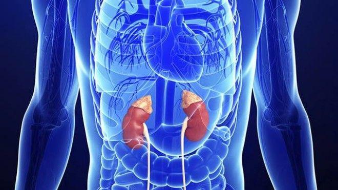 За да разберете какво хормонално разстройство сте изразили, достатъчно е да погледнете тялото си 11