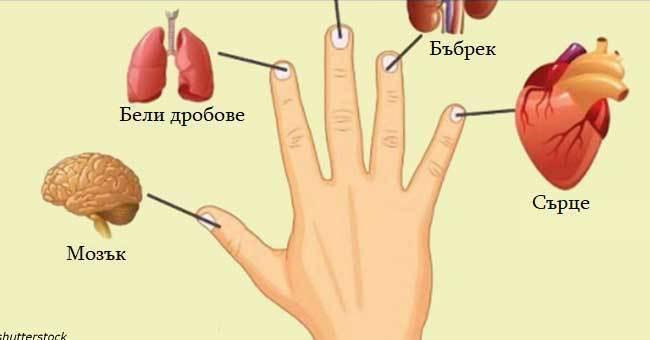 Всеки пръст е свързан с два органа: Японска техника за самолечение за 2 минути 33