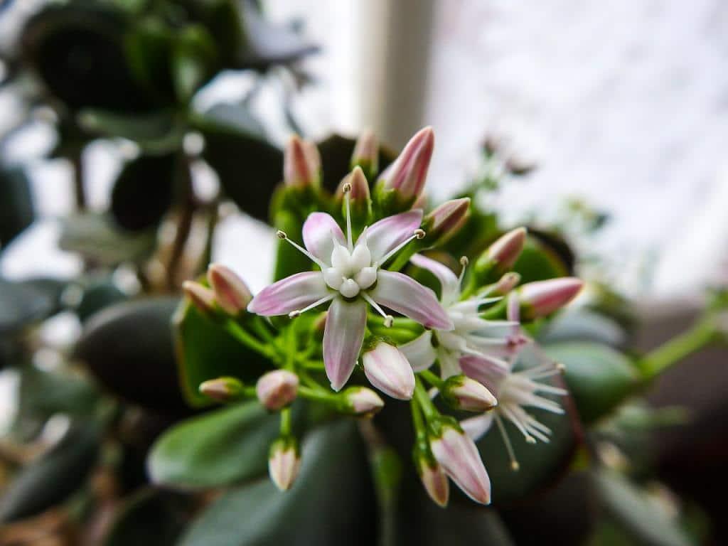 Грижете се за това растение у дома и ще имате много пари (СНИМКИ) 55