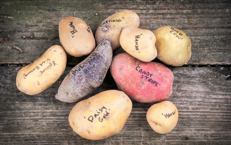 Уникални и интересни факти за картофите, които малцина знаят 59