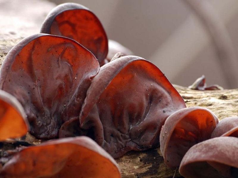 Как да се предпазим от животозастрашаващите кръвни съсиреци? 35
